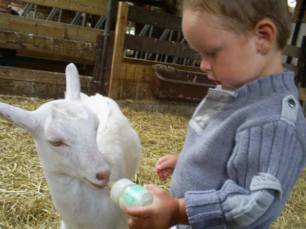 kinderen met dieren (13)